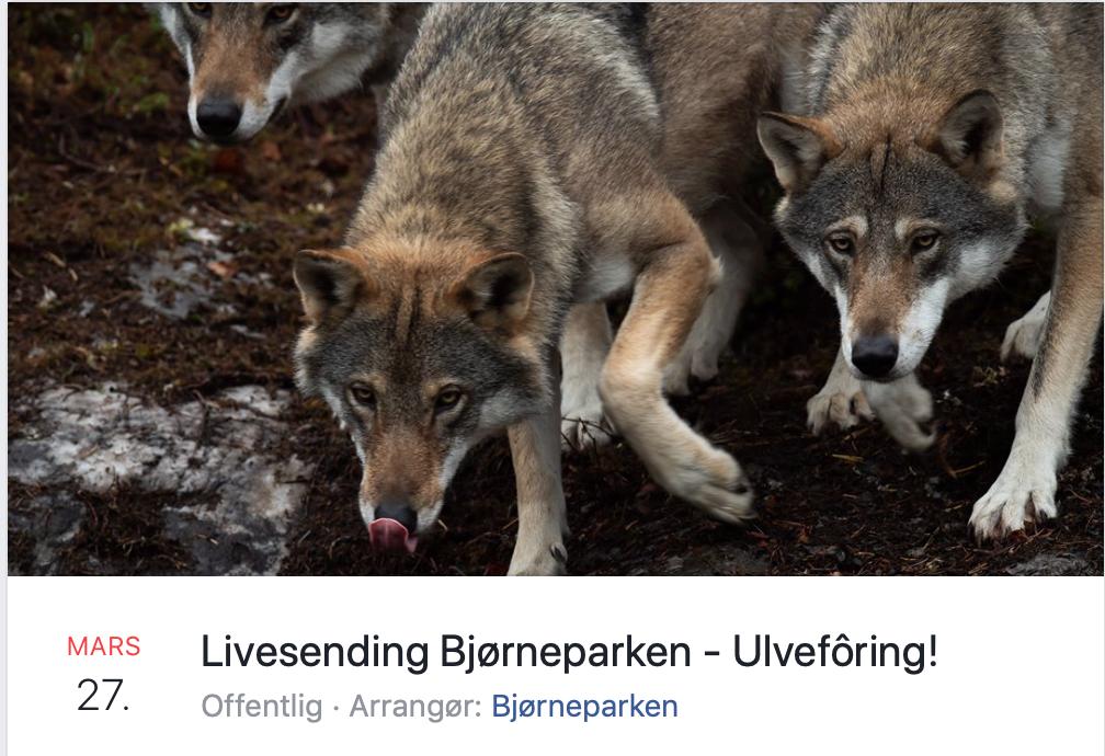 Dette bildet mangler alt-tekst; dets filnavn er Skjermbilde-2020-03-26-kl.-06.57.01.png